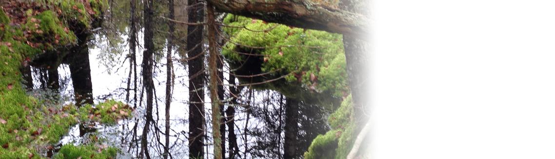 Skogstjärn i skog