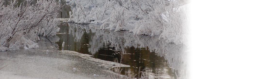 Frostiga buskar och vatten som är på väg att bli is