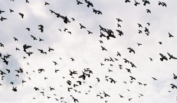 Bild på flyttfåglar